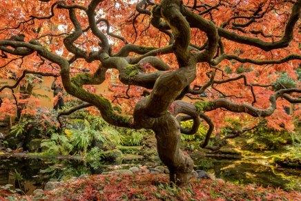 अनुपयोगी वृक्ष