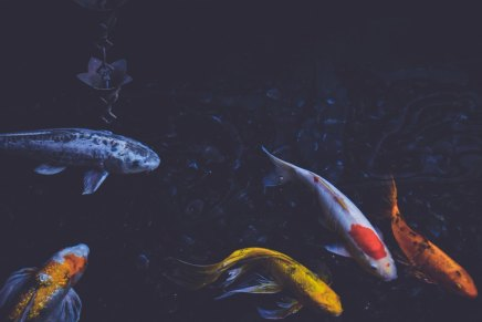प्रसन्न मछलियां