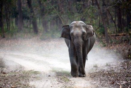 गुबरीले और हाथी