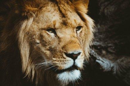 शेर और लोमड़ी