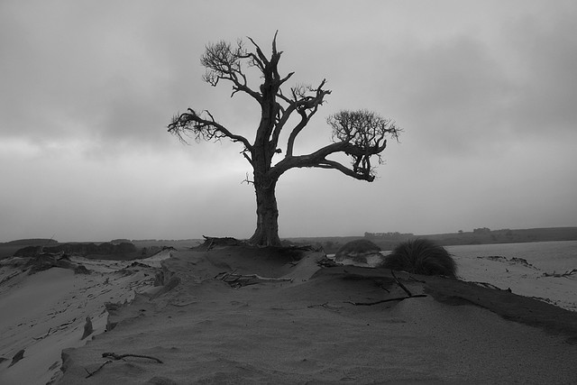 Dead Tree Chatham Islands