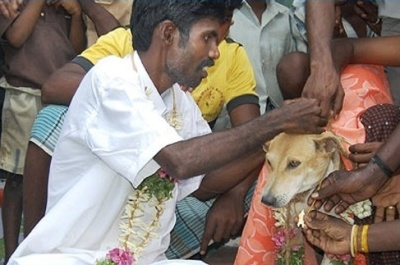 indian dog wedding
