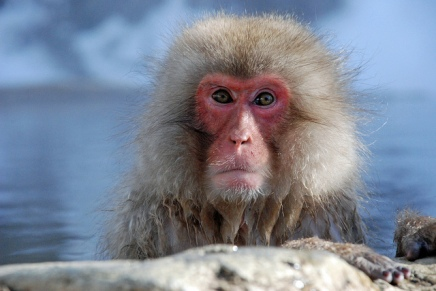 100 वें बंदर कीक्रांति
