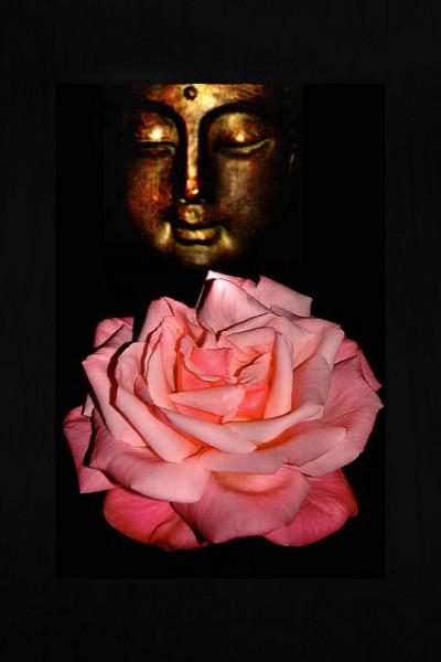 buddha rose