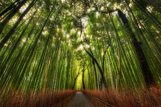 "Today's daily photo was taken while exploring the wilds outside of Kyoto a few weeks ago.  It was a beautiful place!  The walk took me into this giant bamboo forest.  After strolling through it for a short eternity, I set up for shot.  This is a standard 5-exposure HDR; it was shot with a 14-24mm lens.  For those of you new to the site, you can find out more about my process in the HDR Tutorial. Some Twitter Lists for You! As you guys know, I've been using Twitter for the past 27 years or so.  Over that time, I've built up a good list of people to follow.  Now, I can share this list and more very easily with you.  When you visit the links below, you can ""Follow"" the list.  Or, you can also go through and follow the individuals.  Any questions?  Just ask below! 	Stuck In Customs Community - This is a list of everyone around here that has signed up on this thread (you can sign up there too!).  This is a great ""channel"" to listen into to hear everything that's going on with all of us!  If you ever need advice, have questions, or just want to share, be sure to follow the people inside and talk it up... that's what Twitter is for! *Make Recommendations for this list here! 	Art for the Right Brain - Here is a collection of inspirational artists, designers, illustrators, and the like that I find inspirational.  I didn't really add any photographers to this list... *Make Recommendations for this list here! 	Art Museums to Know - Did you know there are Museums on twitter too?  They talk about new exhibits,visiting artists, special events, and the like.   *Make Recommendations for this list here! 	Funny Twitter Heads - A collection of very funny people on Twitter.  If you are easily offended... don't look!  *Make Recommendations for this list here! 	Wow - Nice Tweets! - A random assortment of people that I follow that send out all kinds of interesting Tweets on this and that.  *Make Recommendations for this list here! Do the good people on here a favor.  Follow the list, and then go through and follow some of the most interesting individuals inside.  Twitter is better once you build your own personalized list, and this will be a really good injection of inspiration into your world, I hope! After you follow the lists and some people therein... Then you can then easily switch to that ""channel"" in Twitter to see the latest.  Also, very soon you'll be able to add that List as a Column in Tweetdeck, a program I highly recommend.  As soon as they enable this, I'll come update this post! And, of course, be sure to tell your friends the fun of lists, especially those new to Twitter.  If people start out by getting good links with nice art and funny comments, it makes it a much better experience from the beginning! from the blog www.stuckincustoms.com"