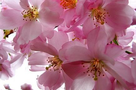 जंगली फूल