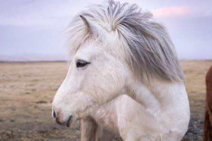 शिष्य और घोड़ा