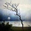 stillness-of-nature-by-alice-popkorn.jpg