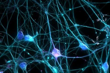 दिमाग में यादें कहां स्टोर होती हैं? क्या उन्हें कम्प्यूटर पर ट्रांसफ़र किया जा सकताहै?