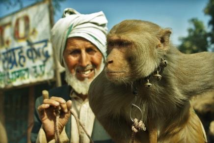 मनुष्य की उत्पत्ति बंदरों से होने के बाद भी बंदरों का अस्तित्व क्योंहै?