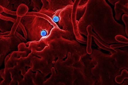 बैक्टीरिया और वायरस कितने दिनों तक जीवित रहतेहैं?