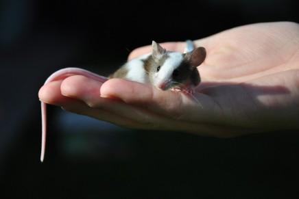मनुष्यों और अन्य जीव-जंतुओं में क्या अंतरहै?